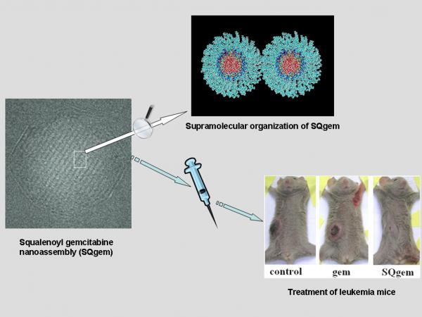 • Flagship phase 1 : Nanomédicaments pour le traitement de maladies sévères / Nano-drugs for the treatment of severe diseases
